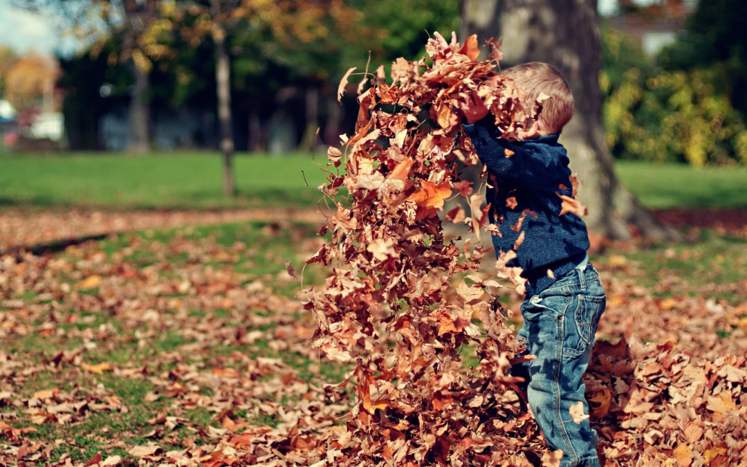 How to have fun with Autumn Leaves